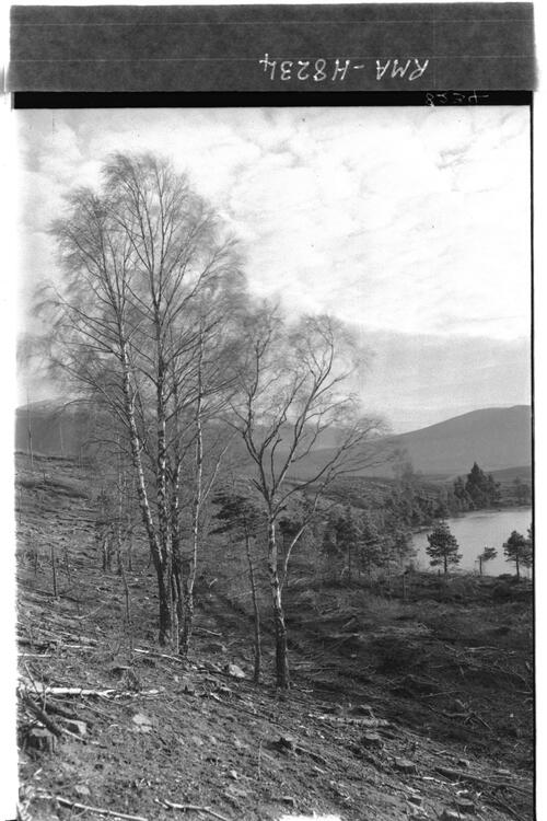 Remnant of wood, Glen Feshie.