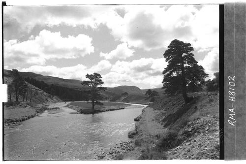 Glen Feshie, river with pines.