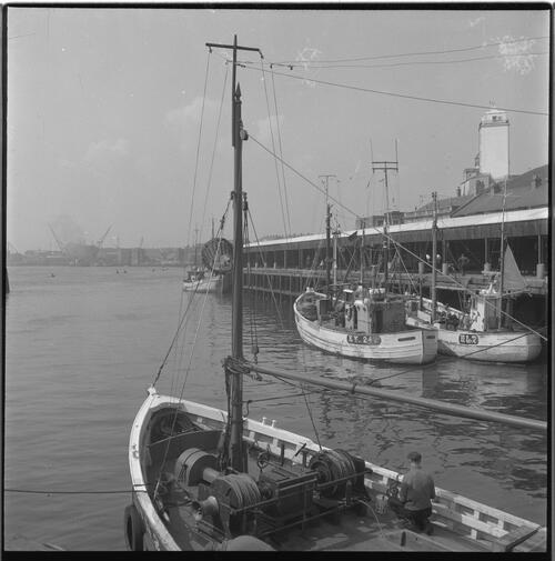 [Boats berthed at the docks, South Shields fishing docks]
