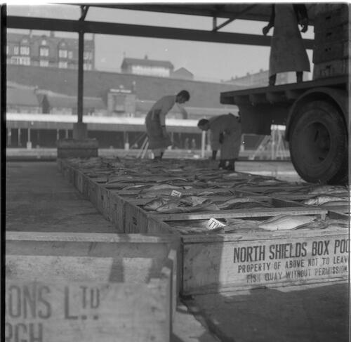 [Men working on boxes with fish, South Shields fishing docks]