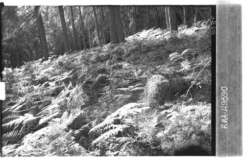 Woodland floor, Kingussie.