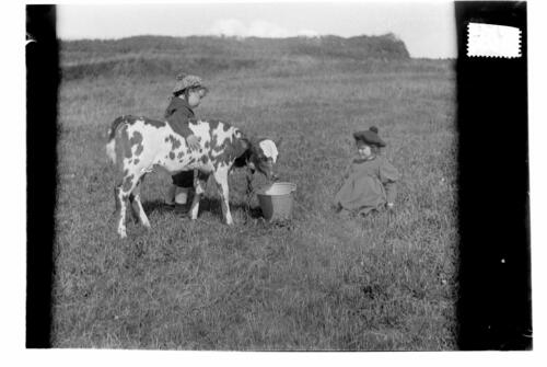 Fred and Ida [Miller with calf, Sliddery, Arran].