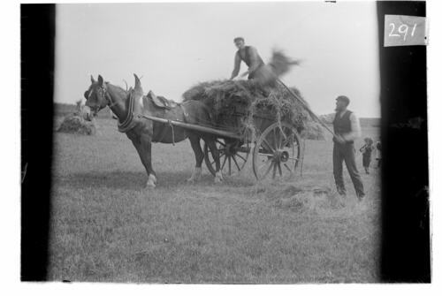 Hay making [Sliddery, Arran].