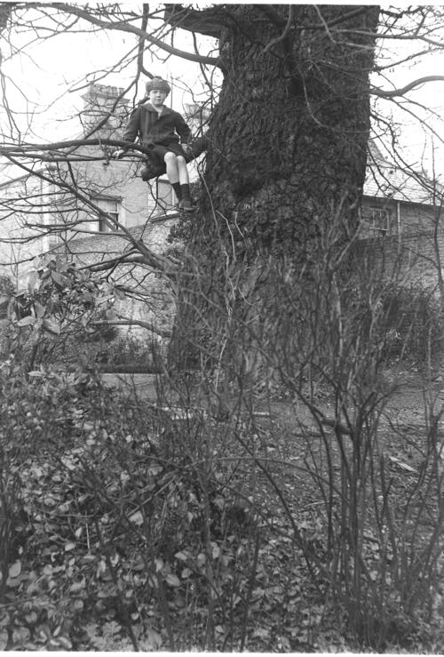 Fred [Miller, up a tree, in the garden of Cleveland Cottage, Isleworth.]