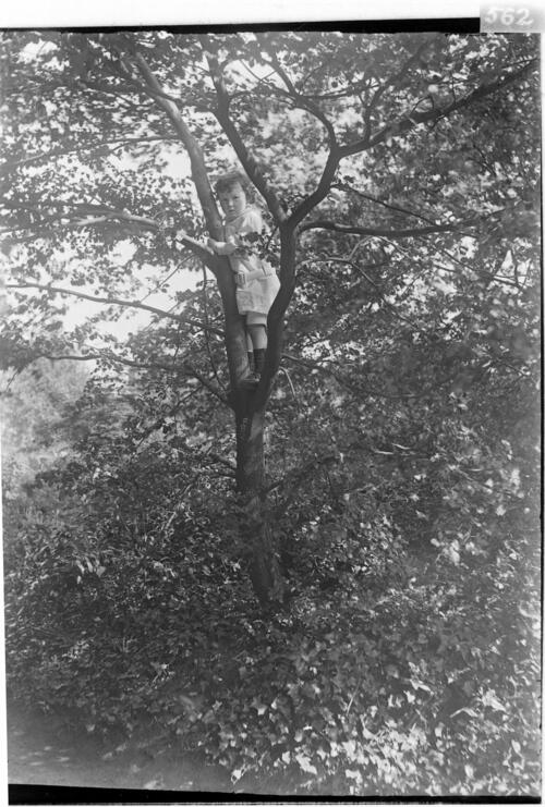 Austin [Miller, up a tree in the garden at Cleveland Cottage, Isleworth].