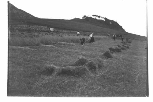 [Harvesting the Oats at Creag a Mhadaidh, Loch Sween].