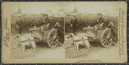 Dog cart , Antwerp, Belgium