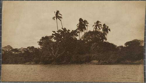 [Palm trees and vegetation on the shore]