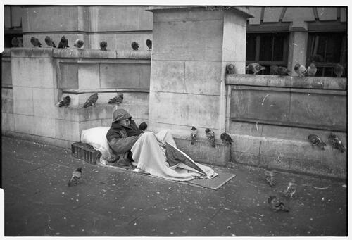 Pigeons and homeless