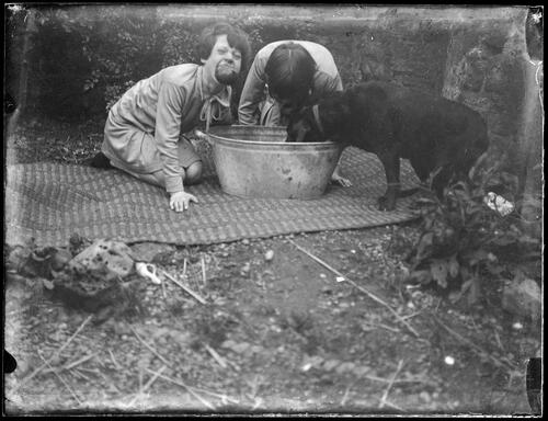 Young girl and a pet dog ducking for apples in garden