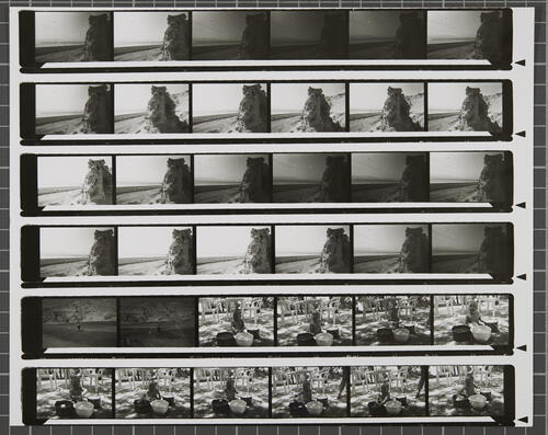 [Lot's Wife contact sheet 44]