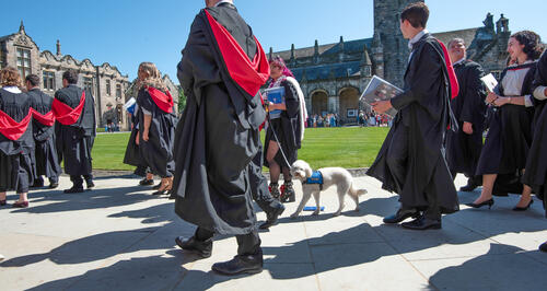 Lulu the emotional support dog taking part in Graduation procession at the University of St Andrews