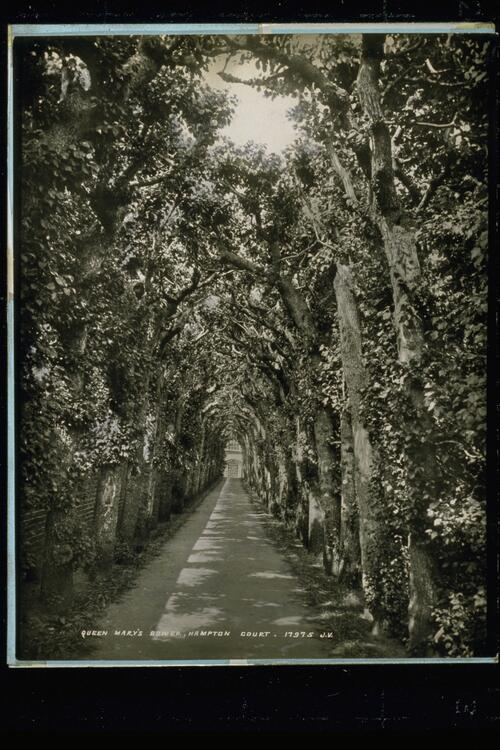 Queen Mary's Bower.