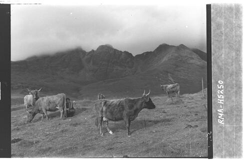 """Open air milking"", Skye."