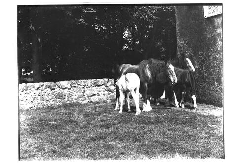 Group of Mares [and foals], Montrave