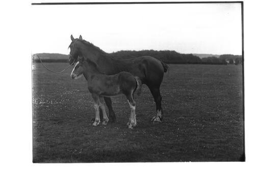 Rosabel and Foal
