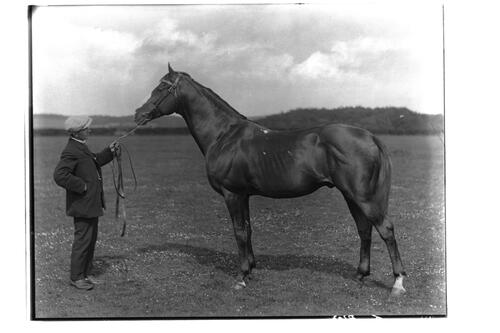 Harvest Money, K.P., Thoroughbred [horse].