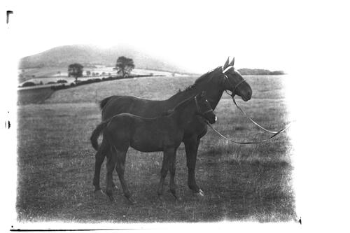 Russell's Prize Hunter, Mare and Foal, Hatton.