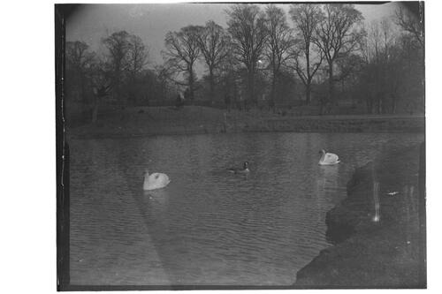 [Pittville Lake, Cheltenham.]