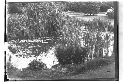 Harborne [Hall] pond.