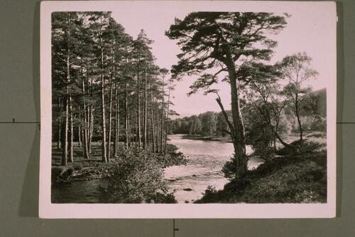In Glen Affaric.