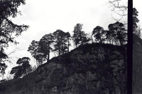 Trees in the highands, Scotland.