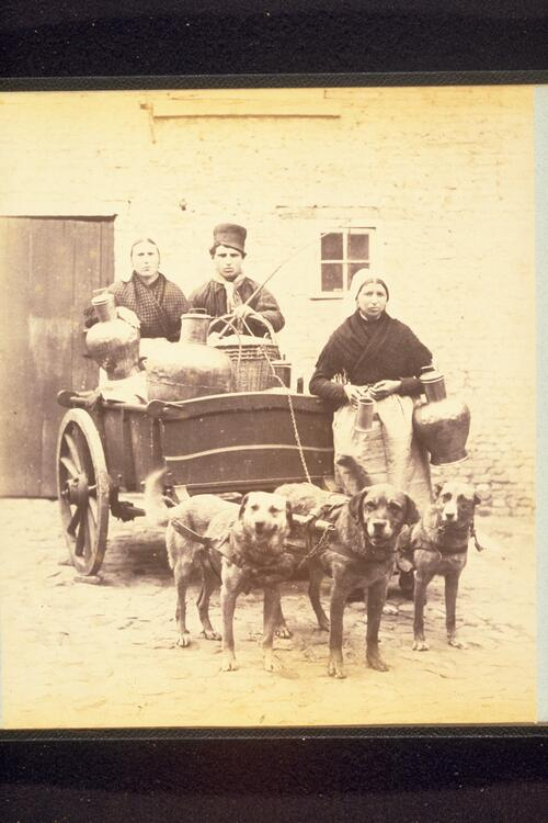 Dog cart, Brussels.