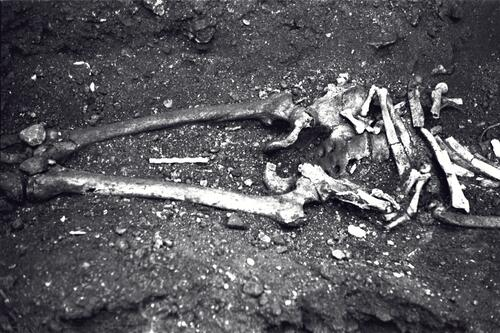 Skeleton from the excavations at the Great Palace, Istanbul (Constantinople).