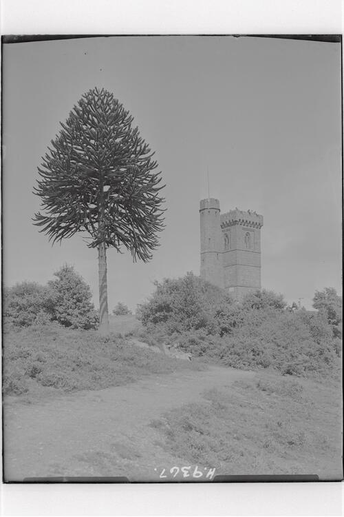 Leith Hill, near Dorking.